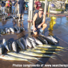 Thumbnail image for Searcher Sportfishing San Diego Still bagging Tunas/Dorados with Limits on Yellows late into the Season, Releases 2012 Schedule