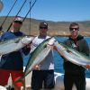 Thumbnail image for San Diego Sport Fishing News: Light Loads Hook on the Local Yellowtails